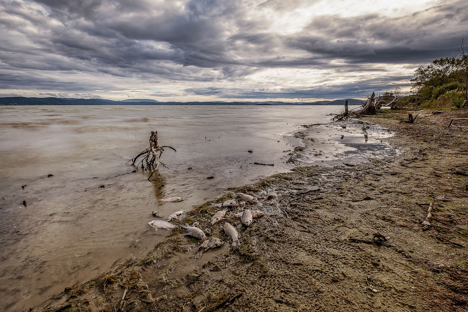 emilanesi-lago-013